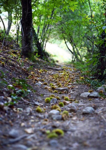 De nombreuses promenades, à la découverte de la nature environnante, sont possibles aux alentours de notre hôtel restaurant (ici, chemin à Saint-Jean du Gard)