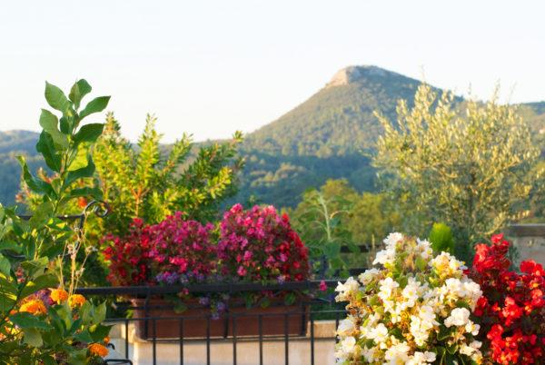 Gastronomie, panorama et environnement fleuri en Cévennes