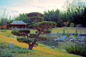 Les jardins japonais de la bambouseraie de Prafrance, à Anduze, en Cévennes