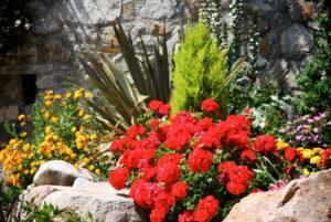 La Porte des Cévennes - Un environnement fleuri