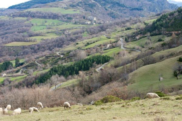 Autour de la commune du Pompidou, paysage pastoral en Cévennes