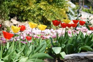 La Porte des Cévennes - Quelques fleurs