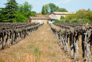 Vignobles languedociens à Massillargues-Attuech, à proximité d'Anduze