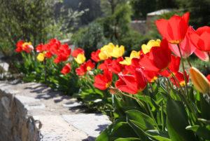 La Porte des Cévennes - Environnement fleuri